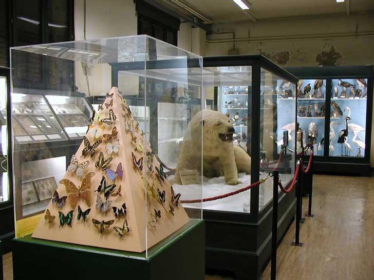 Museo del Medioevo
