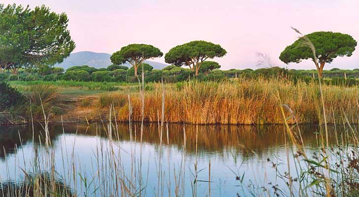 Descubre el parque de la Maremma, Naturaleza y playas vírgenes
